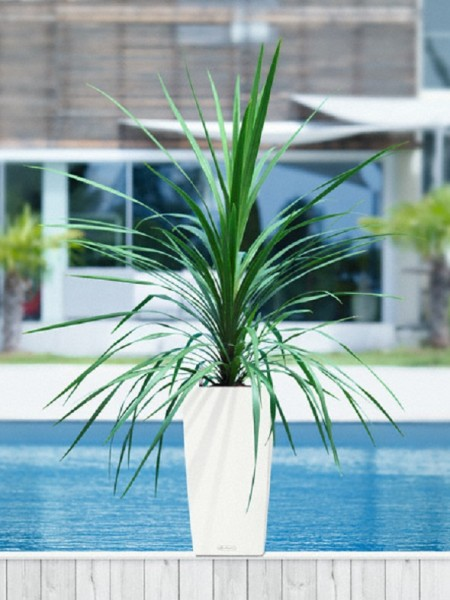 addi_cubico_color_30_w_cordyline_large