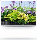 besseres_pflanzenwachstum_normal