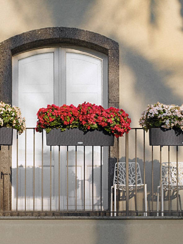 addi_balconera_cottage_80_3_gra_begonia_large