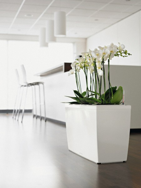 addi_cararo_w_orchideen_large