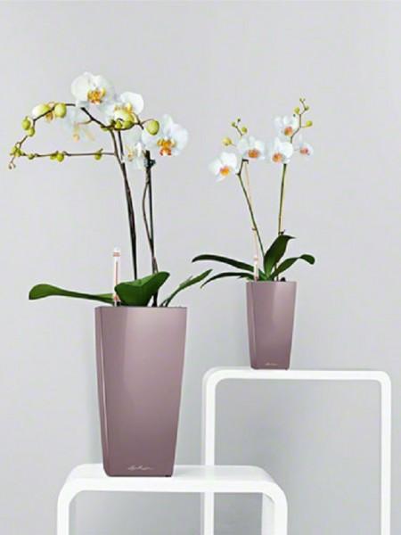 addi_cubico_mini_maxi_2_quail_phalaenopsis_large