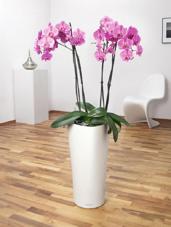 addi_delta_30_w_orchidee_large