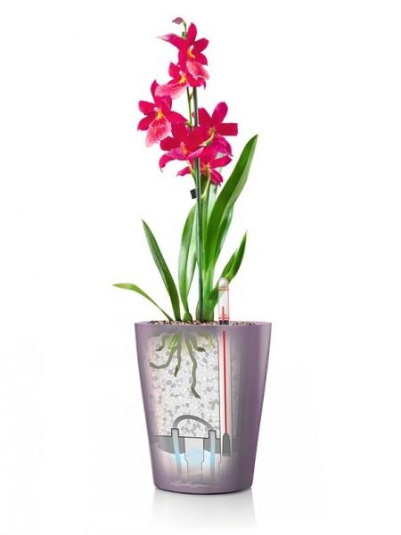 addi_deltini_quail_fkt_orchidee_large