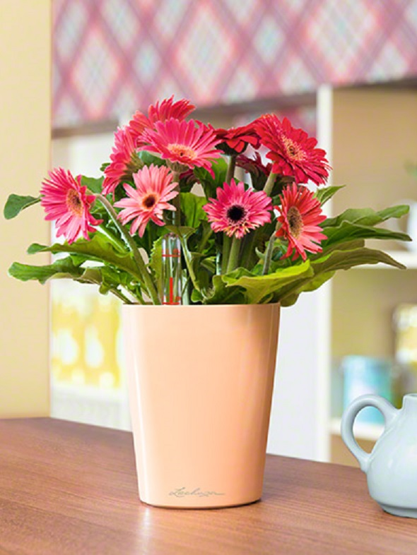 addi_mini_deltini_apr_gerbera_large