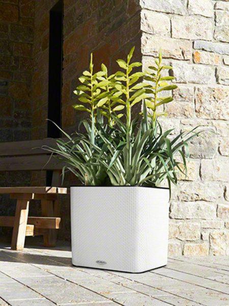 vazonai orchidėjoms
