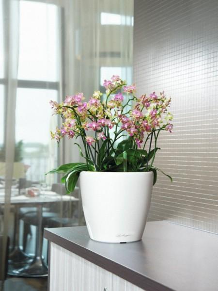 addi_classico_ls_35_w_orchidee_large