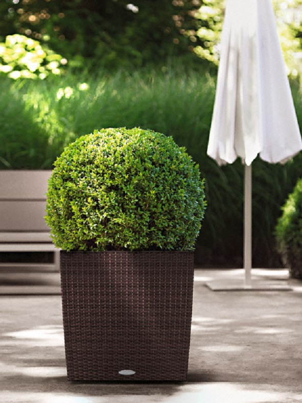 addi_cube_cottage_50_mok_buxus_large
