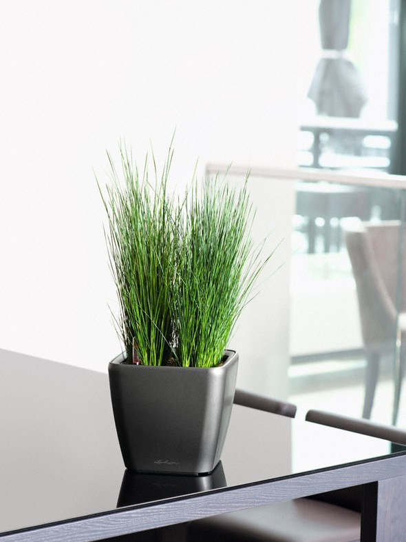 addi_quadro_ls_21_anth_juncus_pencil_grass_large