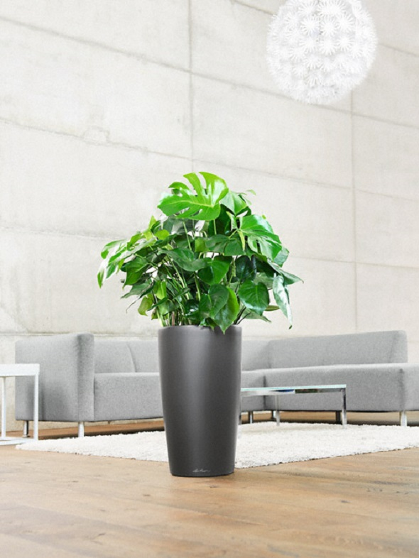 addi_rondo_32_anth_philodendron_large