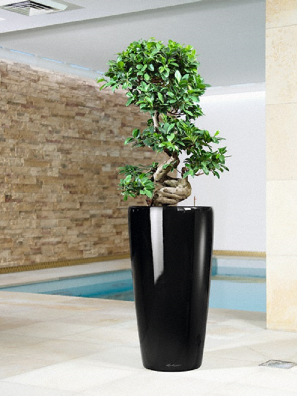 addi_rondo_40_sw_ficus_bonsai_large