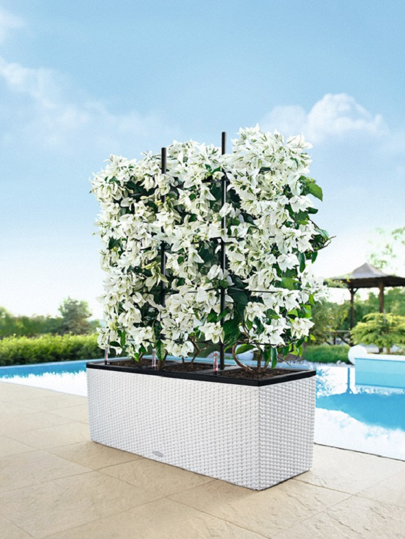 addi_trio_cottage_30_w_bougainvillea_white_large