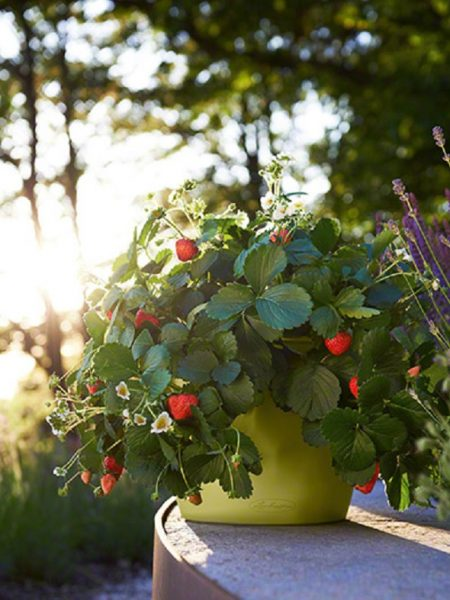 vazonai gėlėms