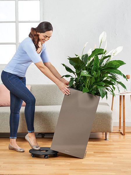 A_CAS_Premium_tp_Spathiphyllum_Kristina