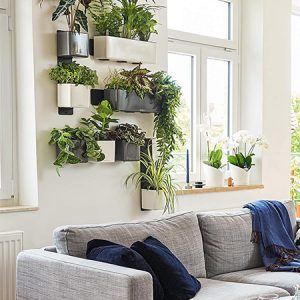 """""""Cube Glossy"""" žaliosios augalų sienos rinkinys"""