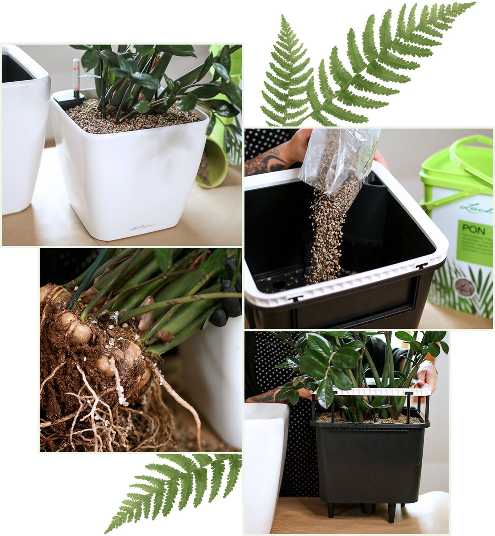 kambariniu-augalu-persodinimas