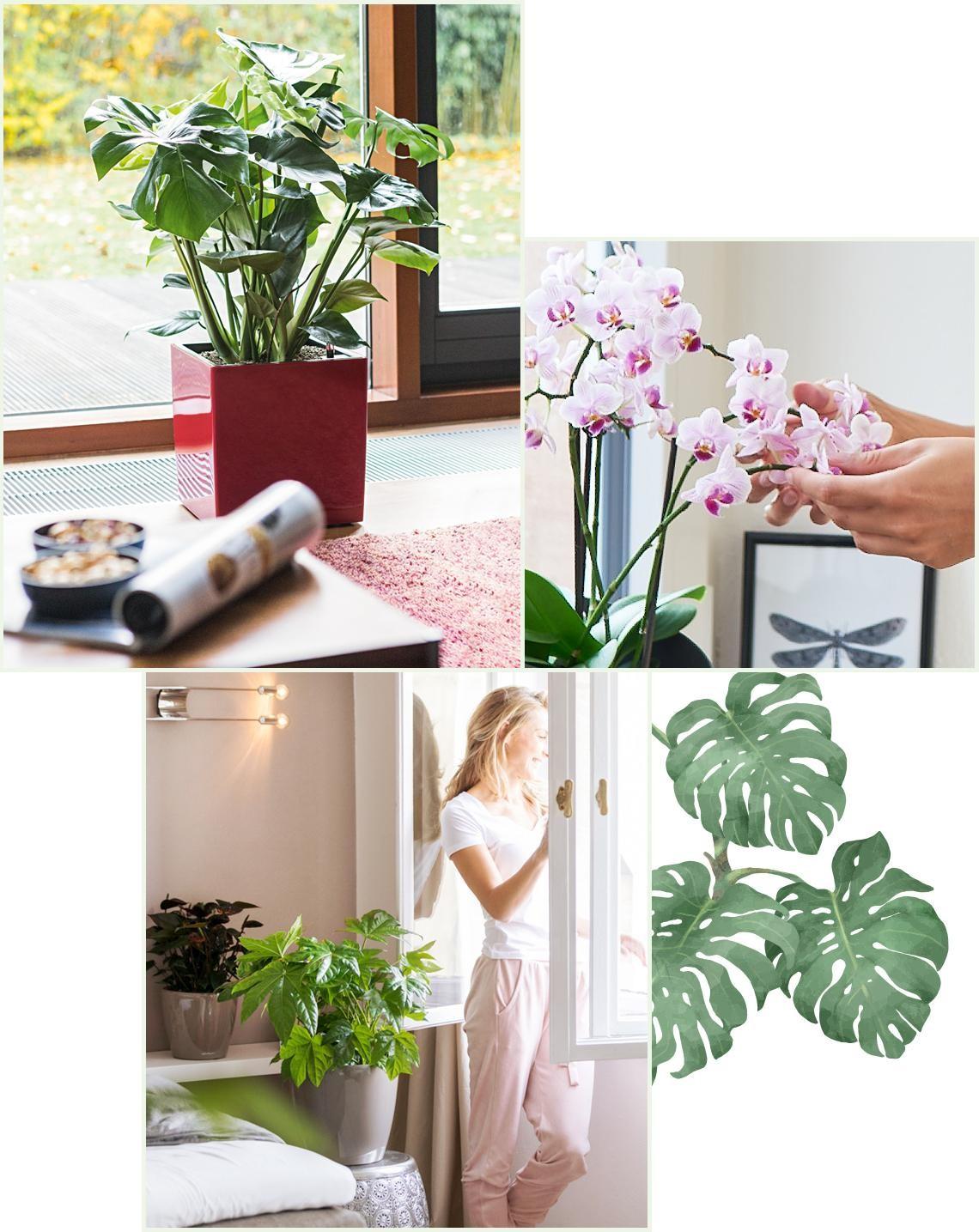 le_tw-indoorplants_abstauben_1-1